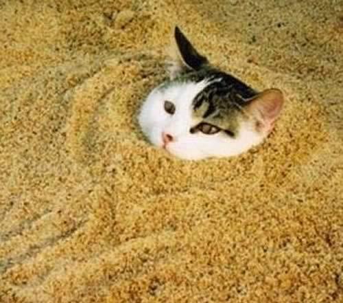Kitty Litter as a Dehumidifier